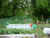 Tulip_allotment_and_trees1_2